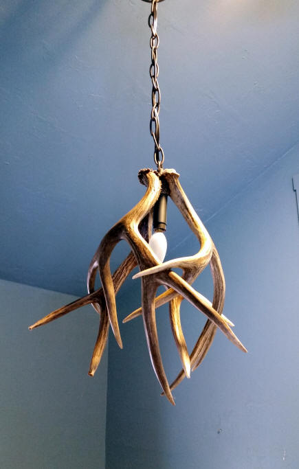 Mule deer antler pendant light