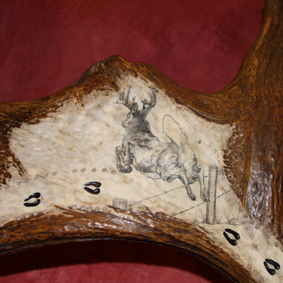 Scrimshaw of whitetail deer