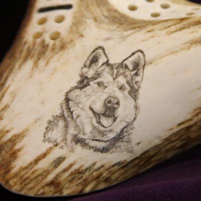 Alaska Malamute scrimshaw on antler