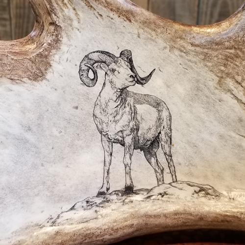 dall sheep scrimshaw antler art
